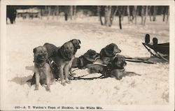 A.T. Walden's Team of Huskies, in the White Mountains