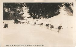 A. T. Walden's Team of Huskies in the White Mts.