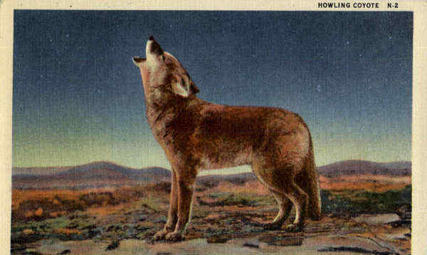 Howling Coyote Cowboy Western Dogs