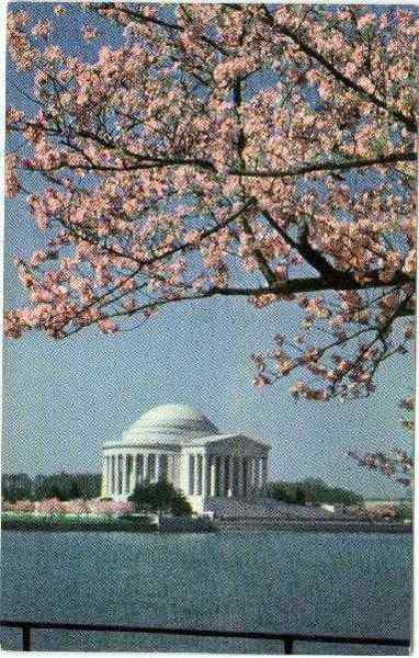 Jefferson Memorial w/Cherry Blossoms Washington District of Columbia