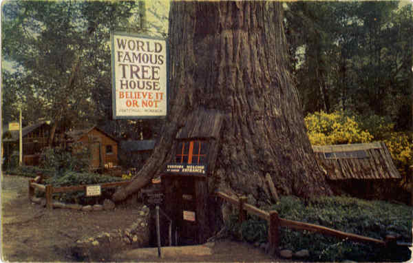 World Famous Tree House Laytonville Ca