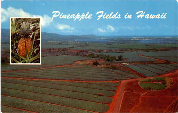 Pineapple Fields Oahu Hawaii