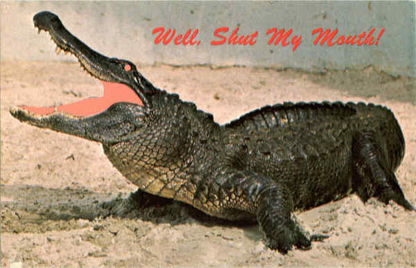 Well, Shut My Mouth - Alligator Alligators
