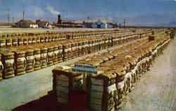 Bales of California Cotton