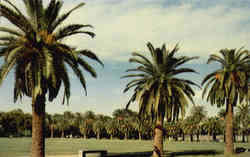 City Park - Palms Postcard