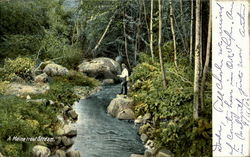 A Maine Trout Stream