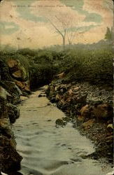 The Brook, Buzzy Hill