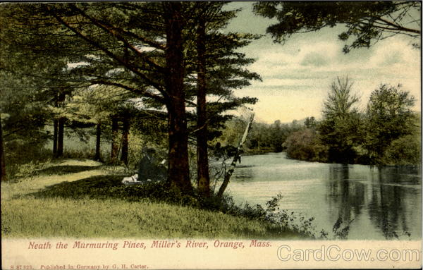 Neath The Murmuring Pines, Miller'S River Orange Massachusetts