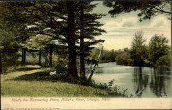 Neath The Murmuring Pines, Miller'S River Postcard