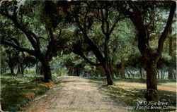 On 17 Mile Drive near Pacific Grove
