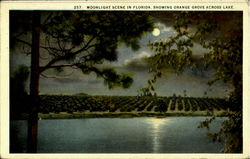 Moonlight Scene In Florida, Showing Orange Grove Across Lake.