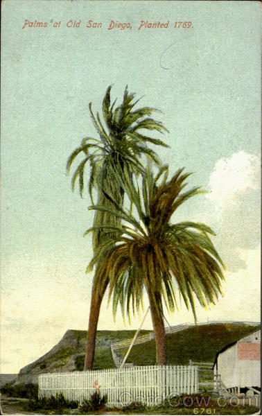 Palms At Old Sandiogo, Painted 1769 San Diego California