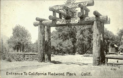 Enterance To Califonia Redwood Park