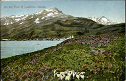 On The Trail To Unalaska Postcard