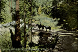 Government Road In Grant Forest Tulare Co Postcard