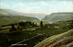 Vineyard At Lewiston