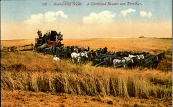 Harvesting Scene, A Combined Header And Thresher