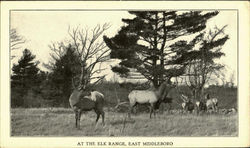 The Elk Range,East Middleboro