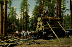 Loading Timber,Lumber Scene