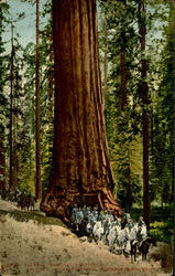 "Big Trees ""Wawona"" California"