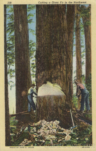 Cutting a Giant Fir in the Northwest Logging