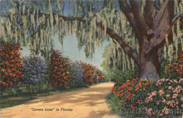 Lovers Lane in Florida Scenic