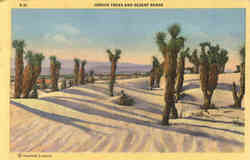 Joshua Trees and Desert Sands