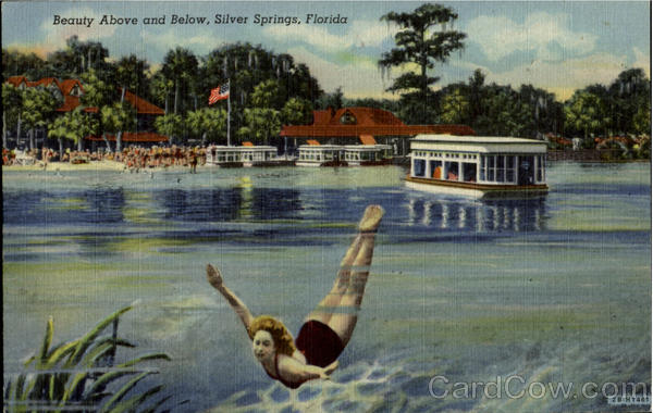 Beauty Above and Below Silver Springs Florida