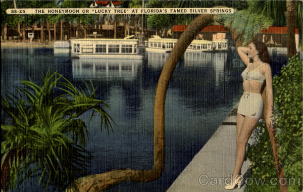 The Honeymoon Or Lucky Tree, Florida'S Silver Suppings Silver Springs