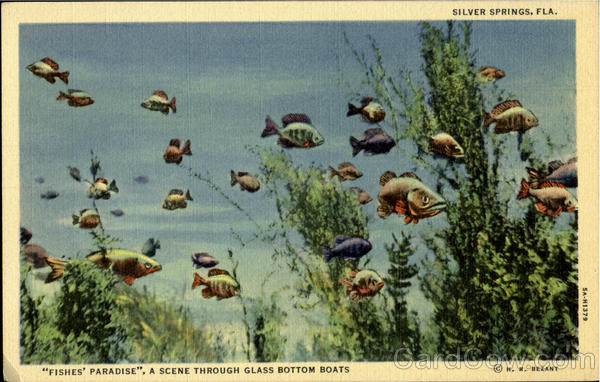A Scene Throught Glass Bottom Boats, Silver Springs Florida