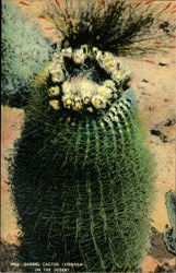 Barrel Cactus (Vrsnaga) On The Desert