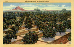 An Orange Grove in Souther Arizona