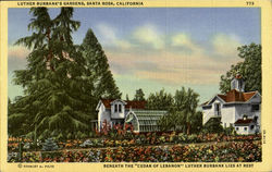 Luther Burbank's Gardens