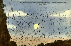Bat Flight from, Cavern Entrance- Carlsbad Caverns National Park