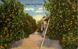 Orange Time in Florida