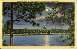 Moonlight Scene in Florida ,showing Orange grove across Lake