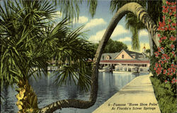 "Famous ""House Shoe Palm "" At Florida's Silver Springs"
