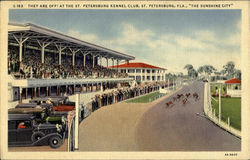 The St. Petersburg Kennel Club Postcard