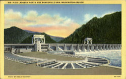 Fish Ladders North Side Bonneville Dam