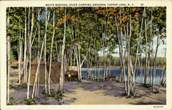 White Birches ,State Camping Grounds,Tupper Lake
