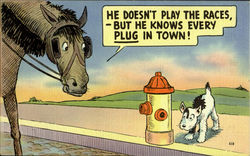 He Doesnot Play The Races -But He Knows Every Plug In Town!