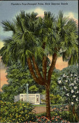 Florida's Four-Pronged Palm