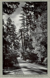 A Highway Scene Through The Redwoods, Near San Jose