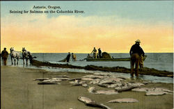 Seining For Salmon On The Columbia River