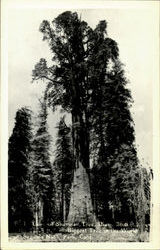 Sherman Tree, Sequoia Natural Park