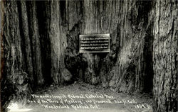 The World's Largest Redwood Cathedral Tree