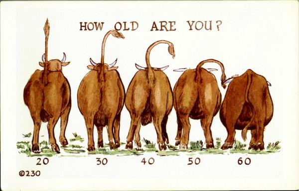 How Old Are You? Comic, Funny Cows & Cattle