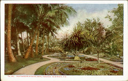 Palm Gardens Of Hotel Royal Poinciana Postcard