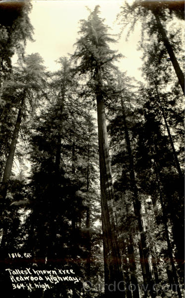 Tallest Known Tree Redwoods Highway California