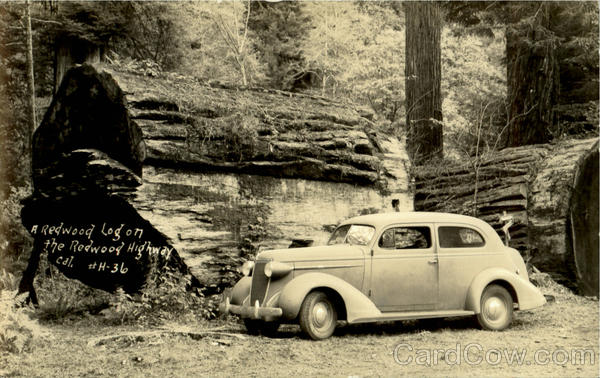 A Redwood Log On The Redwood Highway California Paterson